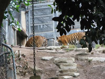 San Diego Zoo 2012-09-12