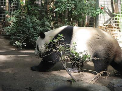 San Diego Zoo 2012-09-29