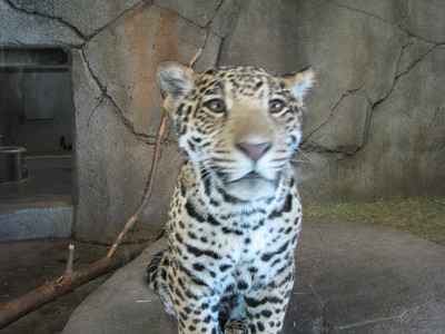 San Diego Zoo 2012-11-17