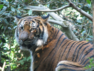 San Diego Zoo 2012-12-04