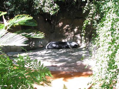 San Diego Zoo 2013-01-11