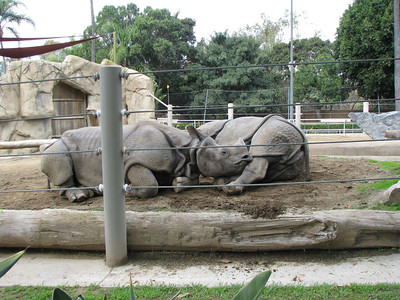 San Diego Zoo 2013-02-06