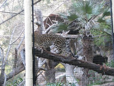 San Diego Zoo 2013-11-28