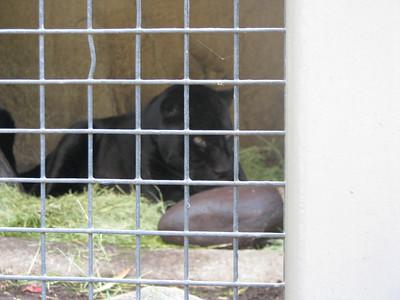 San Diego Zoo 2014-04-11
