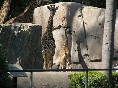 San Diego Zoo 2014-07-06