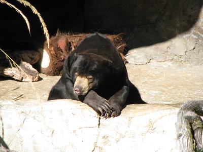 San Diego Zoo 2015-03-04