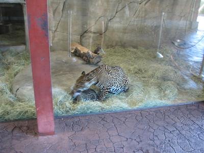 San Diego Zoo 2015-04-12