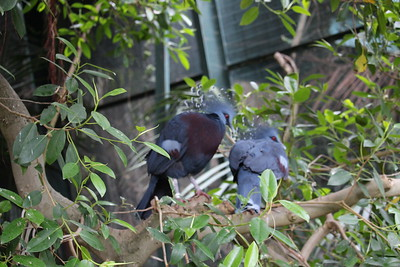 San Diego Zoo 2015-06-17