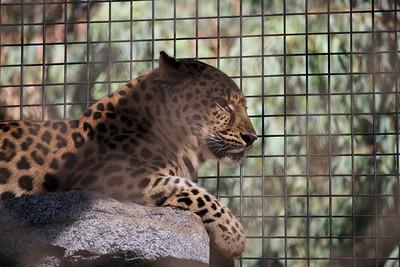 San Diego Zoo 2015-09-07