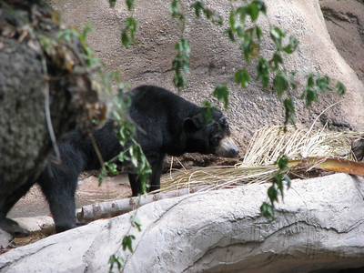 San Diego Zoo 2014-05-26