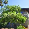 3147  Front Street, San Diego - 1912 Charles Martin House, Richard Requa, Architect, Craftsman Style