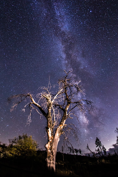 Milky Way and a Halloween tree