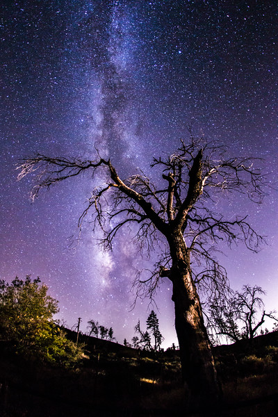 Milky Way and a spooky tree.