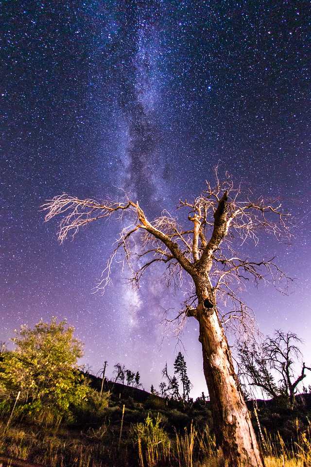 Milky Way and a spooky tree. Take 2.