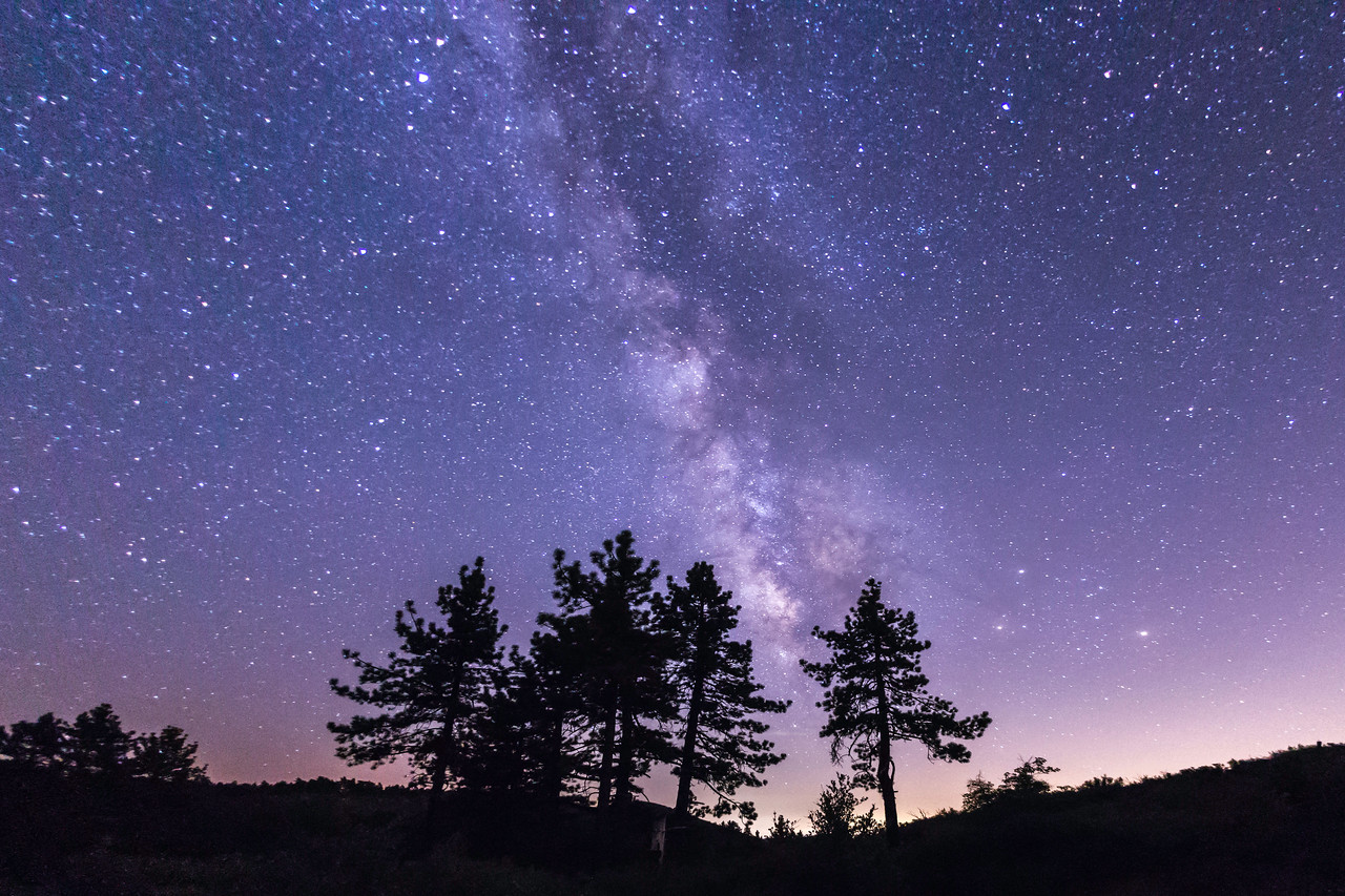 Pine trees and the Milky Way
