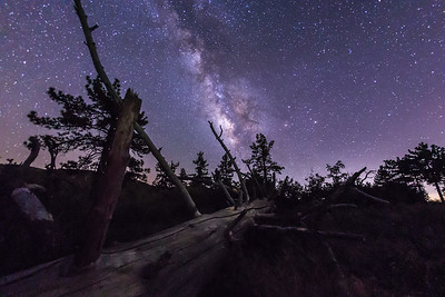 Milky Way and Fallen Tree