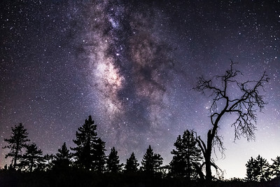 Pine Trees, One Oak Tree, and the Milky Way in Mount Laguna