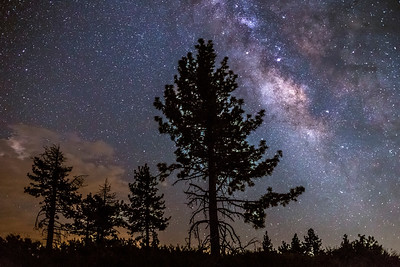 Milky Way, Pine Trees, and Some Clouds