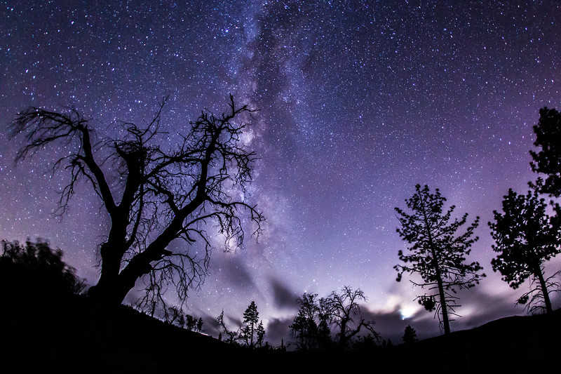 Enchanted forest and the Milky Way. Take 2.