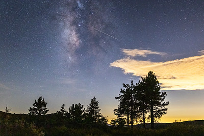 Milky Way, Perseid Meteor, and Jeffrey Pines.