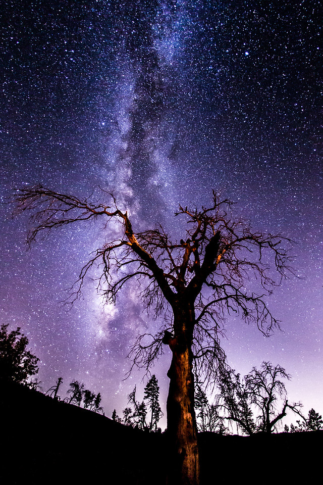 Another shot of the spooky tree and Milky Way