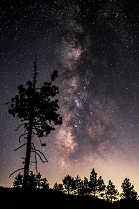 Pine trees and the Milky Way In Mount Laguna