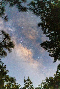 Milky Way Shines Through an Opening in the Pines.