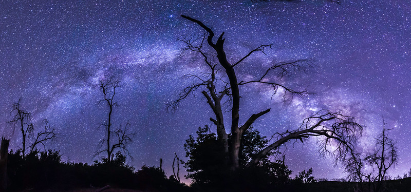 The Eerie Trees and the Milky Way in Cuyamaca