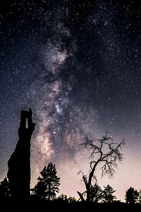 Dead & Living Pine Trees and the Milky Way In Mount Laguna