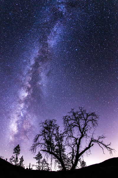 Milky Way and tree silhouette