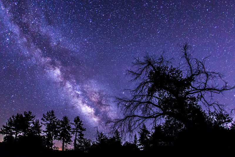 Trees and the Milky Way