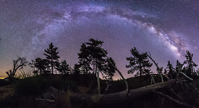 Milky Way Over Fallen Tree Panorama - Take 2