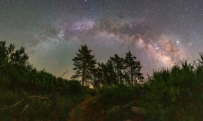 See the Forest For the Trees and the Milky Way