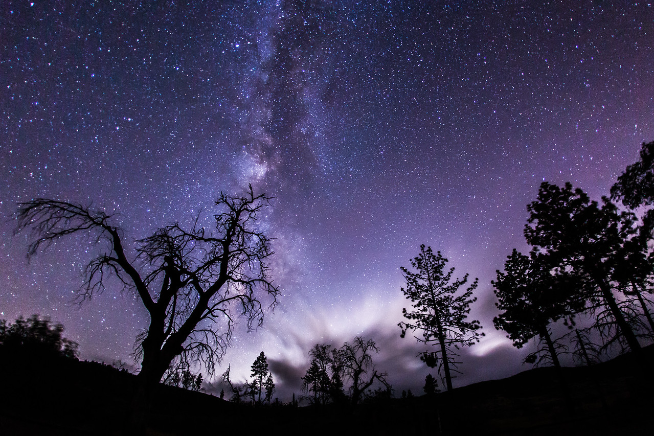 Enchanted forest and the Milky Way. Take 1.