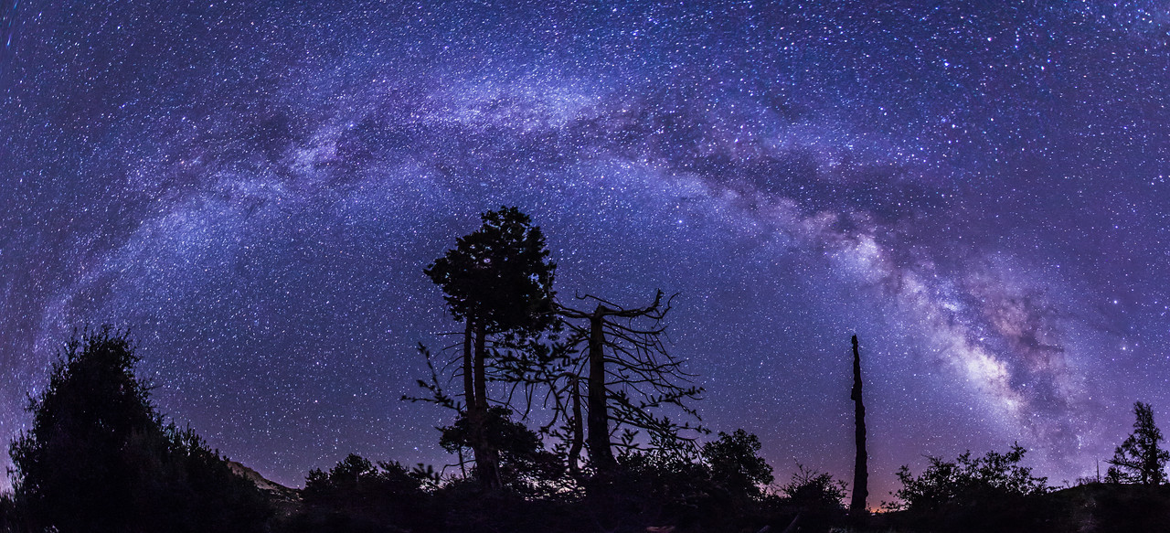 Another Milky Way and tree panorama in Cuyamaca