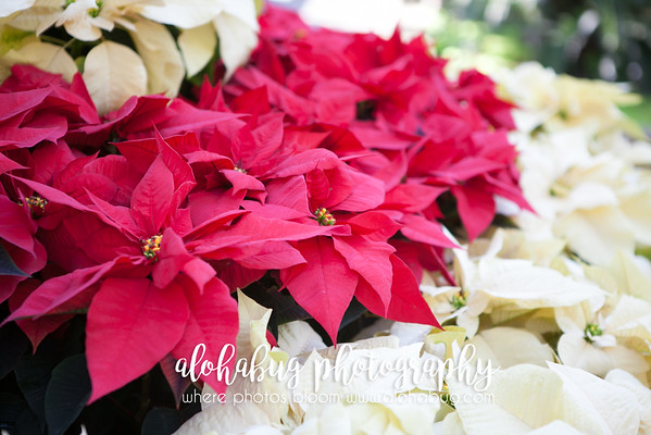 Friends of Balboa Park Annual Poinsettia Party Photos by AlohaBug Photography