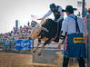 Lakeside Rodeo 2012_2312