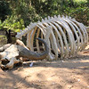 San Diego Safari Park 2013