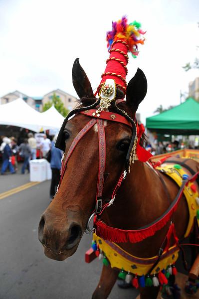 Sicilian Festival Horse Portrait, 2011