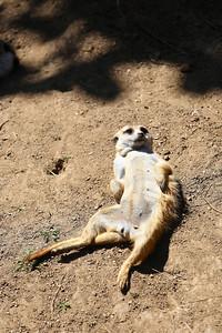 San Diego Zoo 2013
