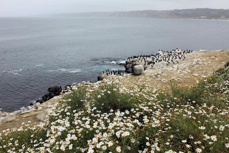 La Jolla Cove - San Diego, CA