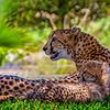 20160327_San Diego Zoo Safari Park_1863