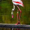 20160327_San Diego Zoo Safari Park_1835