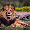 20160327_San Diego Zoo Safari Park_1871