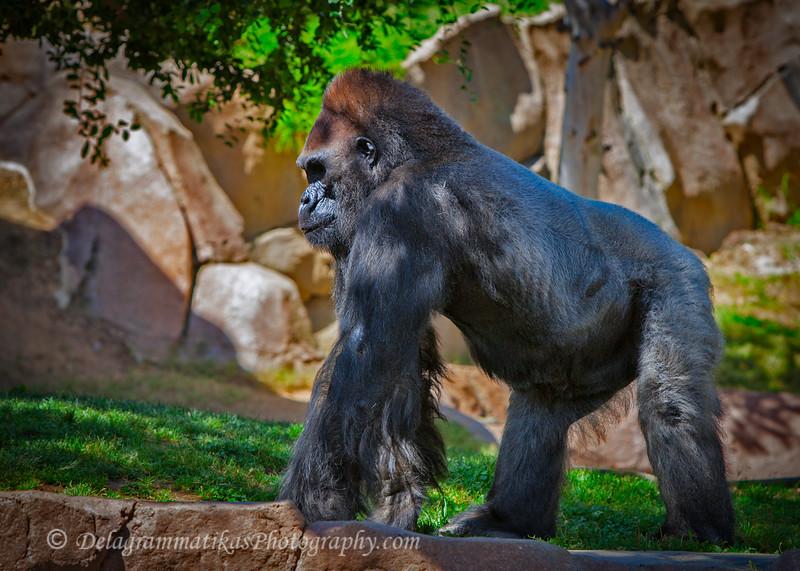 20160327_San Diego Zoo Safari Park_1737
