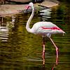 20160327_San Diego Zoo Safari Park_1836