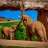 20160327_San Diego Zoo Safari Park_1963
