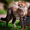 20160327_San Diego Zoo Safari Park_1853