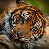 20160327_San Diego Zoo Safari Park_1988