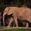 20160327_San Diego Zoo Safari Park_1957
